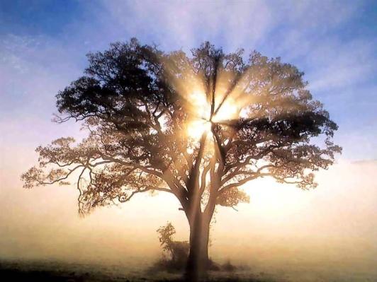 tree-of-wisdom.jpg (800×600)
