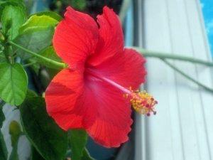 Flower of Life1