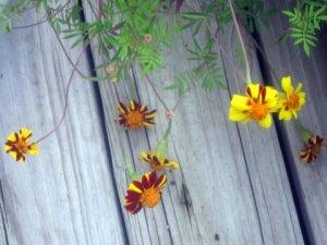 Flower of Life2