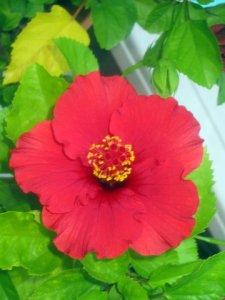 Flower of Life3