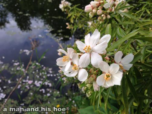 20140502-CherryBlossomsOnLake1