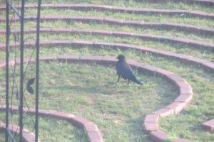 Bird reaching the center