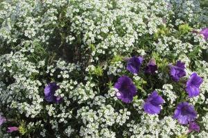 Deck blossems holding onto summer