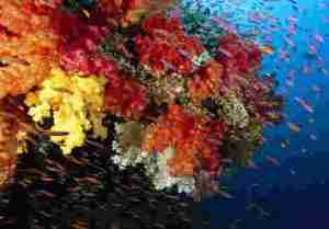 coral main 3