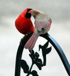labyrinth cardinals