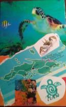 TURTLE Virgin Islands